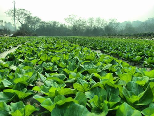 蔬菜种植基地