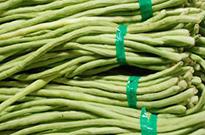 江苏蔬菜龙8国际官网授权公司讲述蔬菜龙8国际官网授权的优点